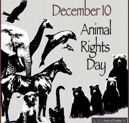 الاعلان العالمى لحقوق الحيوان ومبادئة