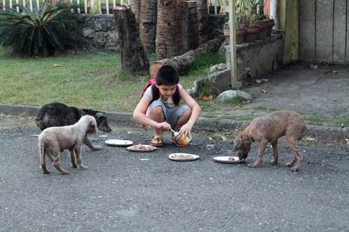 الرحمة بالحيوان مبدأ إسلامى أصيل