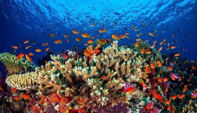 الشعاب المرجانية ..أبهى وأعجب مخلوقات الله