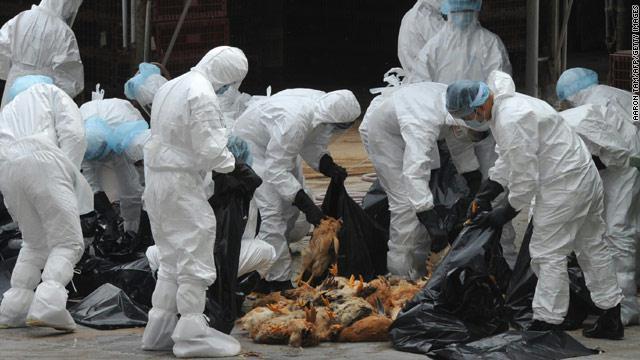 الاجراءات الوقائيه لمرض انفلونزا الطيور