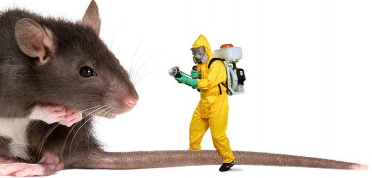 اهم المبيدات الكميائية للفئران