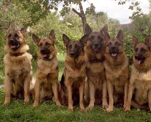الأسس الواجب مراعاتها عند تغذية الكلاب