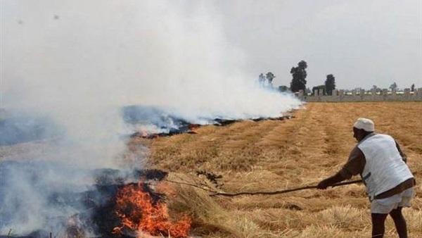 قش الأرز  .. ثروة تقدر بملايين الجنيهات يتم حرقها عن عمد!  فضلا عن تلويث الهواء والاضرار بالبيئة