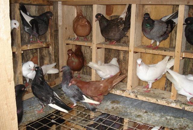 شروط تربية الطيور بالمنزل الريفى