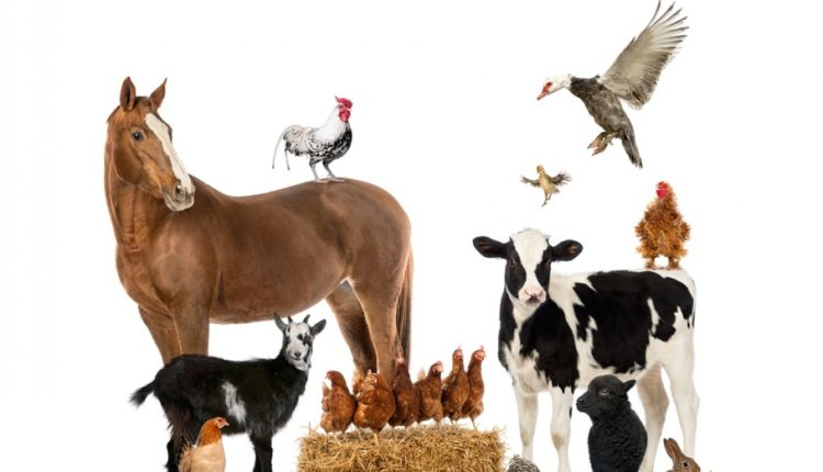مجالات تنمية الثروة الحيوانية