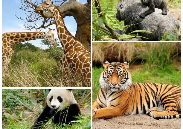 جهود ومحاولات مصرية للحفاظ على النباتات والحيوانات المهددة بالانقراض