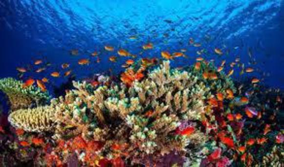 الشعاب المرجانية ابهى واعجب مخلوقات الله ا