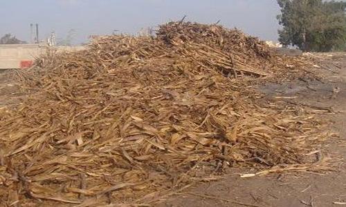تدوير المخلفات الزراعية لانتاج السماد العضوى (الكومبوست)