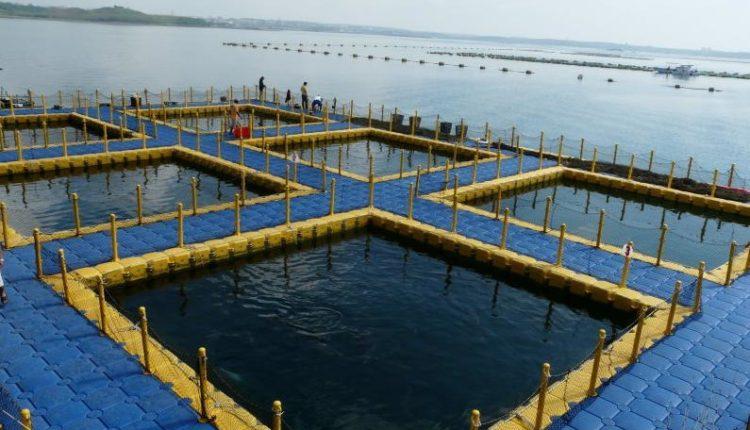 الاستزراع السمكى شبة المكثف