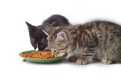 وجبات منزلية مغذية للقطط