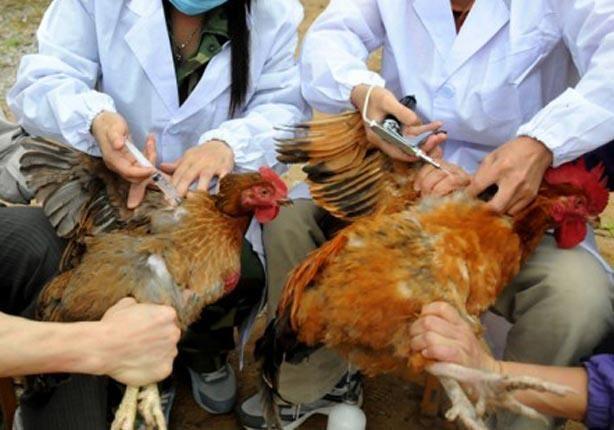 احذروا التحصين ضد عترات انفلونزا الطيور منخفضة الضرواة
