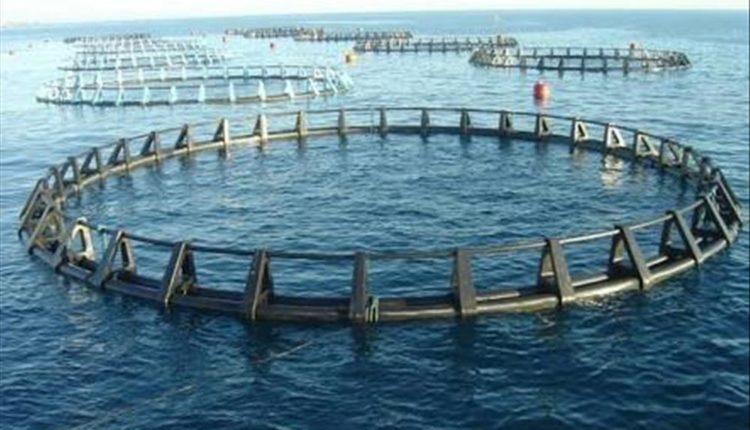 اسباب وحلول زيادة نسبة الامونيا في المزارع السمكيه