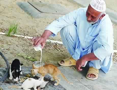 الرفق بالحيوان عنوان حضارة الاسلام