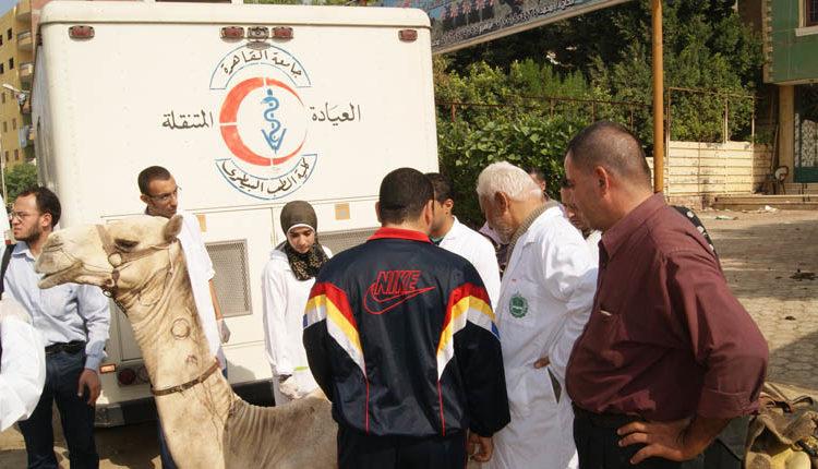 الطب البيطري في مصر حاله حرجه