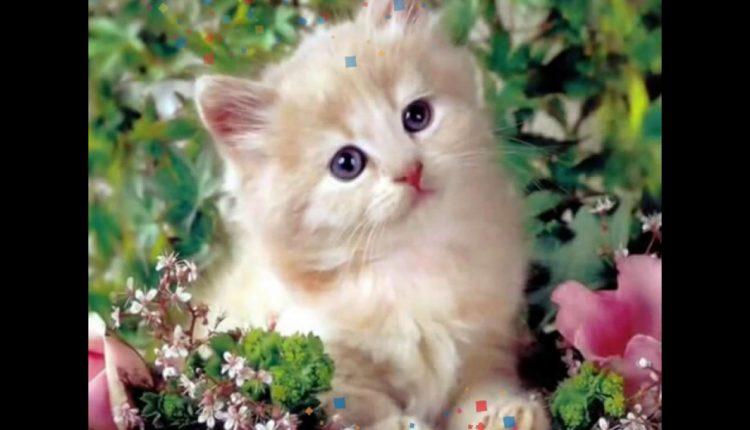 تعال نتعارف انا القطة بوسى