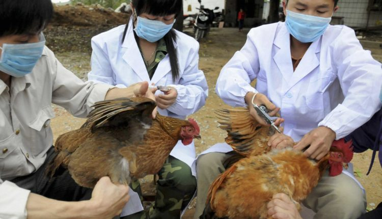 قصة انفلونزا الطيور او فرانكشتاين القرن ال 21