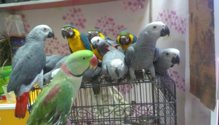ماذا أفعل إذا مرض أحد طيور الزينة عندى؟