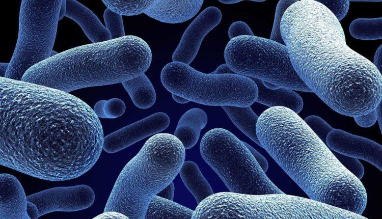 البكتيريا المقاومه للمضادات الحيويه تدمير الثروه الحيوانيه