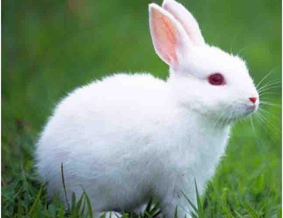 4 قواعد في تغذيه ارانب اللحم