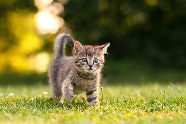 امراض القطط …الوقايه والعلاج