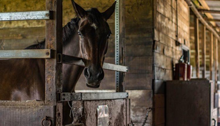 طرق تشييد وتجهيز اسطبلات الخيول