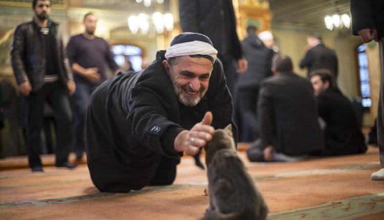 الرفق بالحبوان ….عنوان حضارة الاسلام