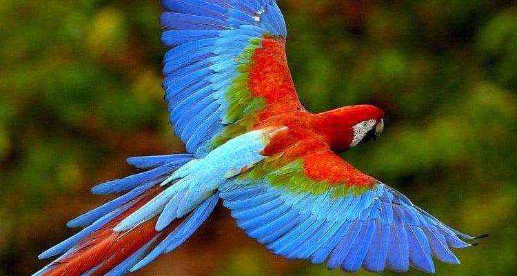 لولا جناح الطائر لفسدت الارض