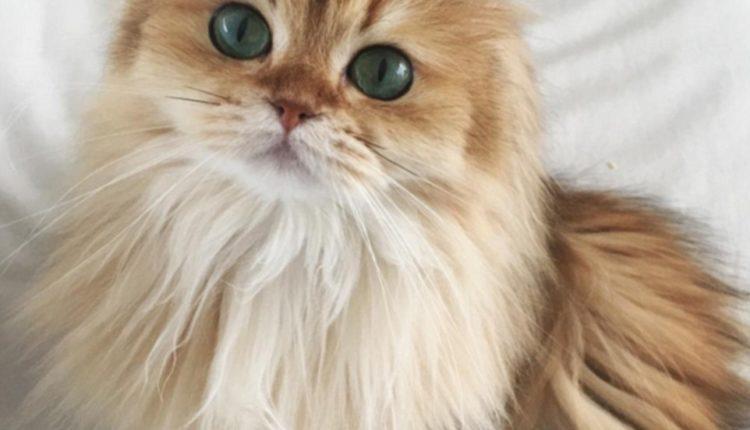 انا القطه2
