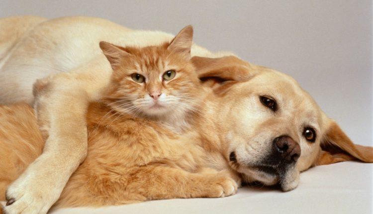 ديدان الاسكارس في القطط والكلاب ….داء يصيب الحيوان والانسان