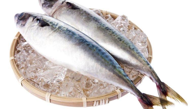 اداره جودة الاسماك الطازجه