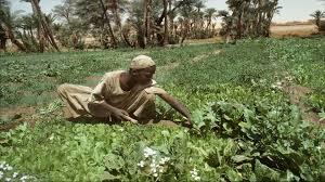 الاكتفاء الغذائي والامن القومي العربي
