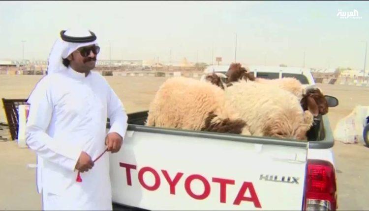 أنواع الاغنام والماعز في المملكة العربيه السعوديه واسماؤها وصفاتها