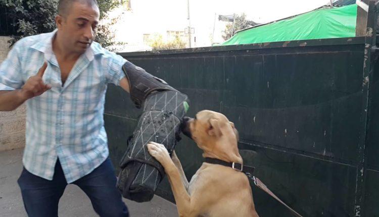 كيف تعلم وتدرب كلبك علي الاوامر الاساسيه
