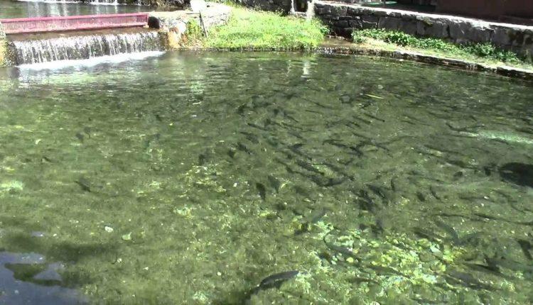 رؤيه لنشر الاستزراع السمكي في المناطق الريفيه