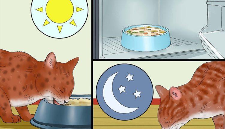 وجبات منزليه مغذيه للقطط